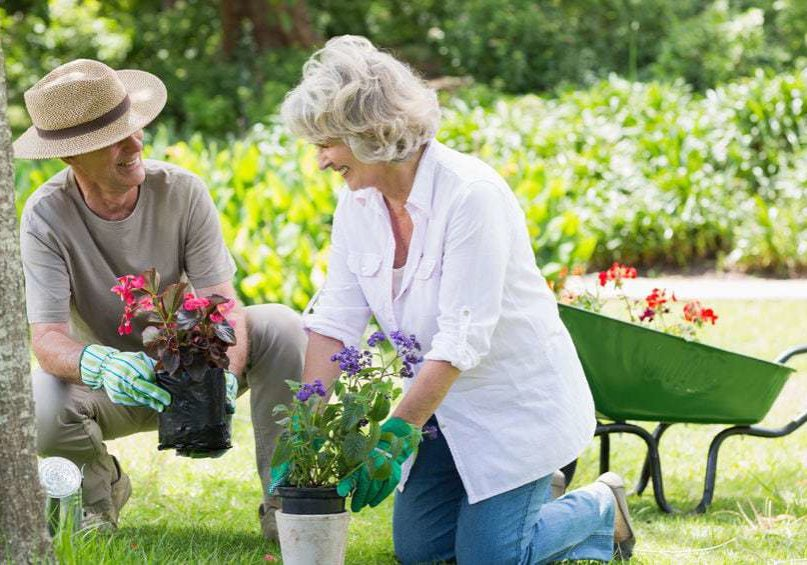 27141203 - smiling mature couple engaged in gardening