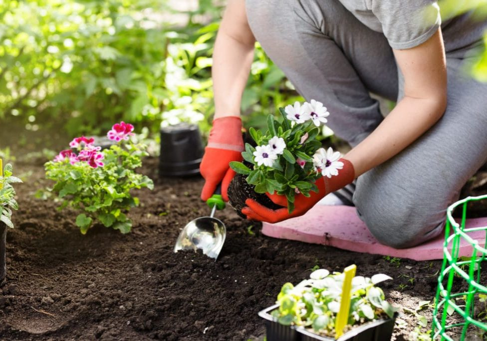 Top tips for gardening with sciatica
